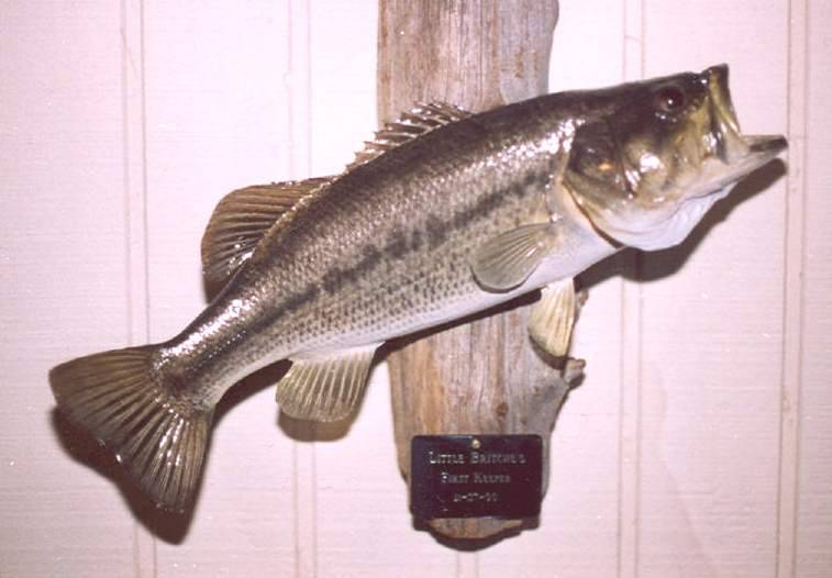 Antique fishing collectibles prices i pay for antique for Antique fishing lures prices